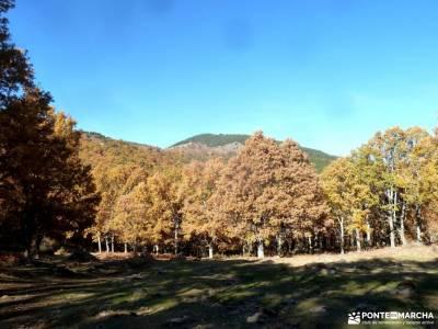 Castañar de El Tiemblo;Ávila; club de montaña en madrid fotos sierra cazorla rutas de senderismo